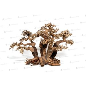 Forest bonsai L